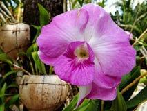 Różowa orchidea , bukiet kwiat Obrazy Royalty Free