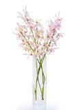 różowa orchidei waza Zdjęcia Royalty Free