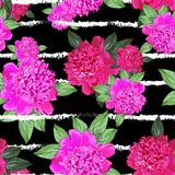 Różowa peonia bezszwowy Zdjęcie Royalty Free