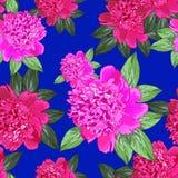 Różowa peonia bezszwowy Zdjęcia Stock