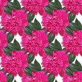 Różowa peonia bezszwowy wzoru Obraz Stock