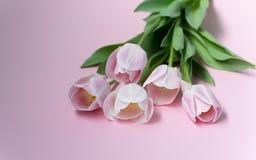 różowe bukietów tulipany Zdjęcia Royalty Free