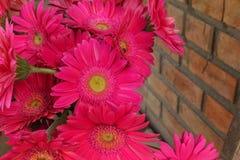 - różowe kwiaty zdjęcia royalty free