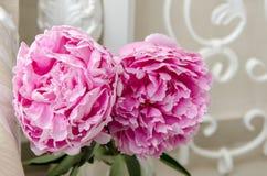 Różowe peonie Fotografia Stock