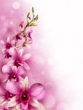 Różowe tropikalne orchidee Fotografia Stock