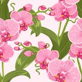 Różowej purpury oferty storczykowy kwiecisty bezszwowy wzór Obraz Royalty Free