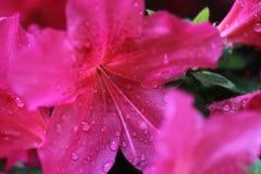 Różowi kwiatów koraliki Obrazy Royalty Free