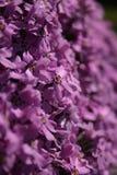 Różowi kwiaty Obraz Royalty Free