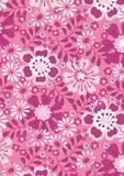 Różowi lato kwiaty Obrazy Stock