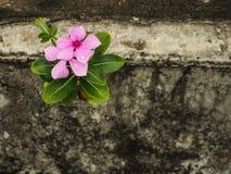Różowi pasteli/lów kwiaty Zdjęcia Stock