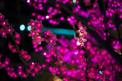Różowi sztuczni kwiaty Chrismas Obraz Royalty Free