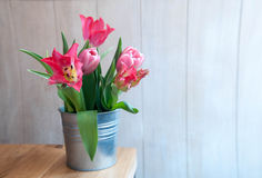Różowi tulipans w garnku Zdjęcia Stock