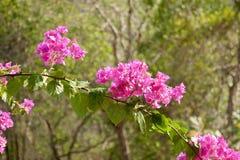 Różowi wiosna kwiaty Fotografia Stock