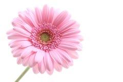 różowy Zdjęcia Royalty Free