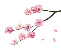 Różowy abloom magnoliowy kwiat royalty ilustracja