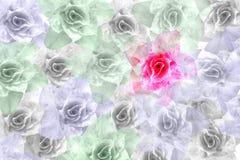 Różowy adenium obesum kwiat Zdjęcia Royalty Free