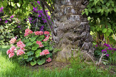 Różowy bodziszek kwitnie w tropikalnym ogródzie Obraz Stock
