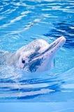 Różowy delfin Obrazy Royalty Free