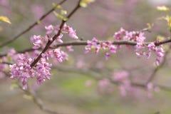 różowy delikatne Obrazy Stock