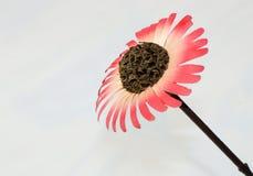 Różowy drewniany kwiat fotografia royalty free