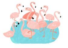 różowy flaming grupy Fotografia Royalty Free