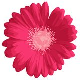 Różowy gerbera lub stokrotki kwiat royalty ilustracja