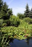 różowy greenness Obrazy Stock