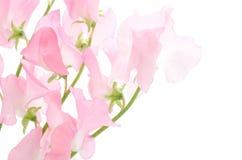różowy grochu cukierki Fotografia Royalty Free