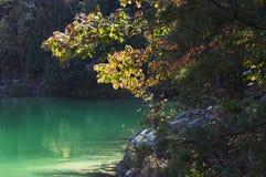Różowy jezioro Obraz Royalty Free