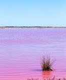 Różowy jezioro port Gregory fotografia stock