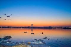 Różowy jezioro w Torrevieja Obraz Stock