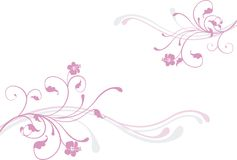różowy kwiat Fotografia Royalty Free