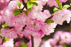 Różowy kwiat Fotografia Stock