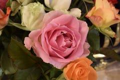Różowy kwiat Zdjęcie Stock
