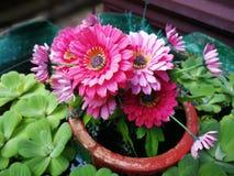Różowy kwiat Obrazy Royalty Free