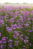 różowy kwiat lasów dzikie Zdjęcia Royalty Free