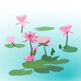 różowy kwiat lotosu Fotografia Royalty Free