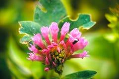 Różowy kwiat przy drzewami Fotografia Stock