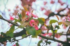 Różowy kwiat przy drzewami Zdjęcie Stock