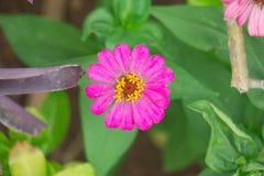 Różowy kwiat tylko jeden Obrazy Stock