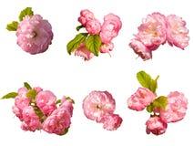 różowy kwiatu set Zdjęcia Royalty Free
