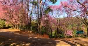 Różowy las Zdjęcia Stock