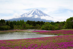 Różowy mech przy Mt fuji Fotografia Royalty Free