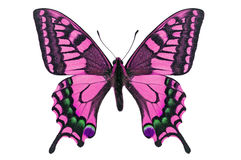 Różowy motyl Obraz Royalty Free