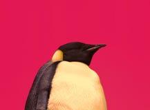 Różowy pingwin Zdjęcia Stock