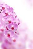 Różowy storczykowy kwiat zdjęcia royalty free