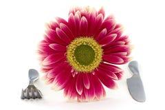 Różowy talerz zdjęcia stock