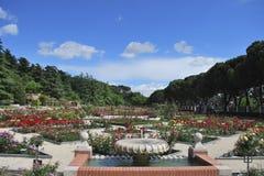 Róża Park Obraz Stock