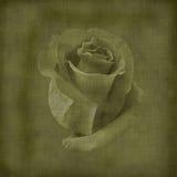 róża stary pocztówkowy rocznik Obrazy Royalty Free