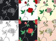 róży tekstura Fotografia Royalty Free